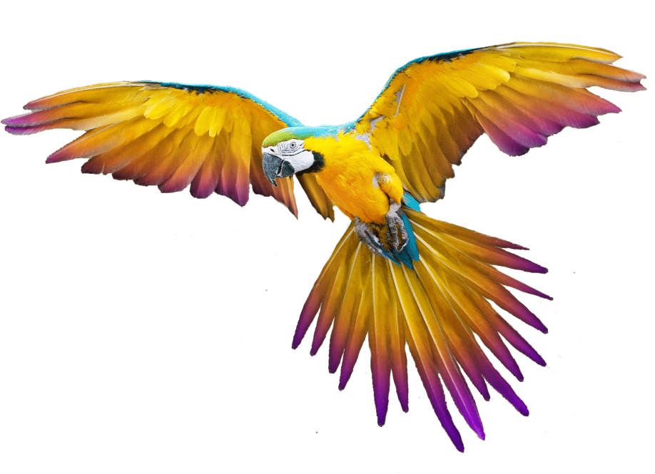 16-flying-parrot-png-images-download Branding: Muvon